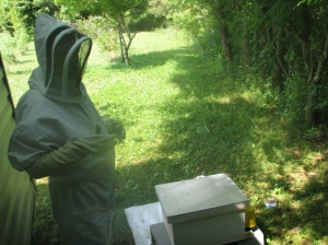 The Newest Bee Keeper